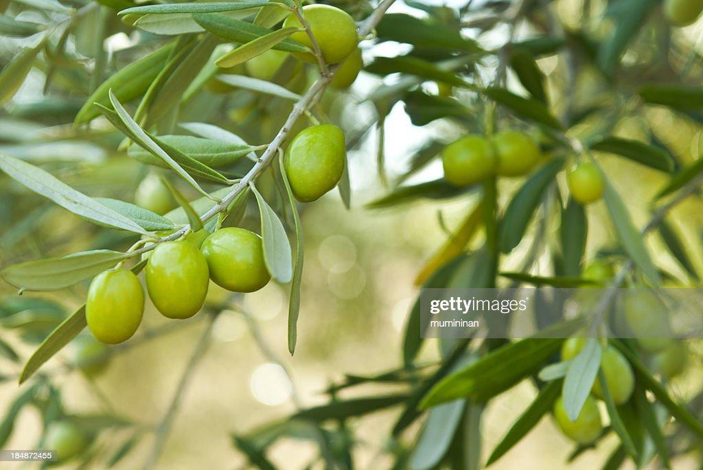 green olives : Stock Photo