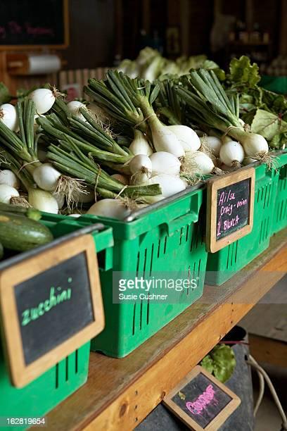 green onions in organic farm store