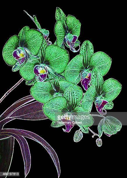 Green orchid fantasy