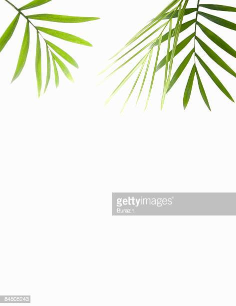 Green Palm leaf background still life