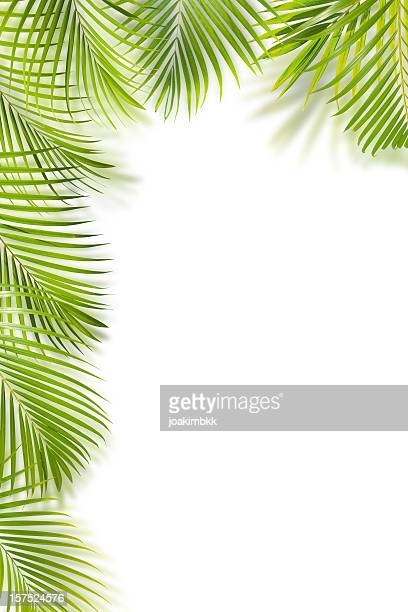 Green palm leaf frame isolated on white with copy space