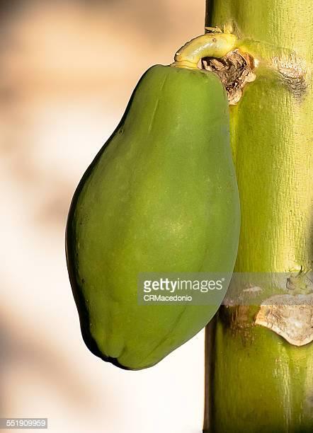 green papaya - crmacedonio fotografías e imágenes de stock