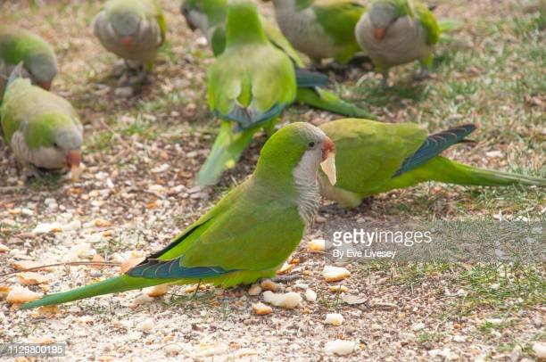270 Small Green Parrot Photos And Premium High Res Pictures Getty Images