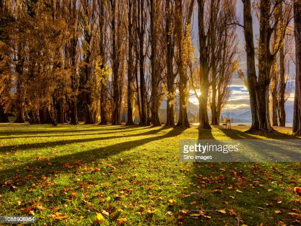green park at sunset, new zealand - image stock pictures, royalty-free photos & images
