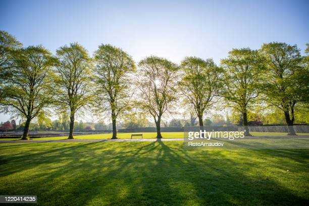 green park fresh sunrise morning - public park stock pictures, royalty-free photos & images