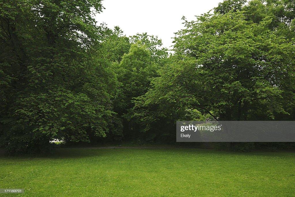 Green park, avec de grands arbres et ancien decideous à l'ombre. : Photo