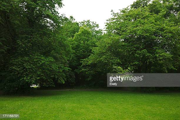 green park  with large old decideous trees and shaded areas. - bush stock pictures, royalty-free photos & images