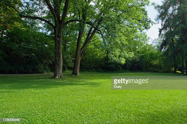Green park con grande vecchio decideous alberi e le aree ombreggiate.