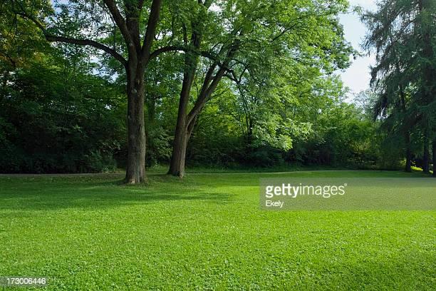 Parque Green com grandes old decideous árvores e áreas sombreadas.