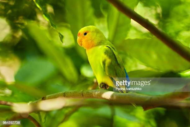 A green parrot perching on a branch at Khao Kheow Open Zoo in Si Racha, Thailand.