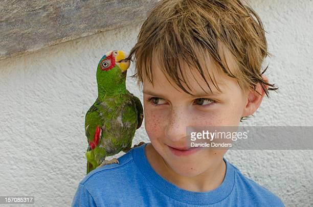 """green parrot tugging boy's hair - """"danielle donders"""" stock pictures, royalty-free photos & images"""