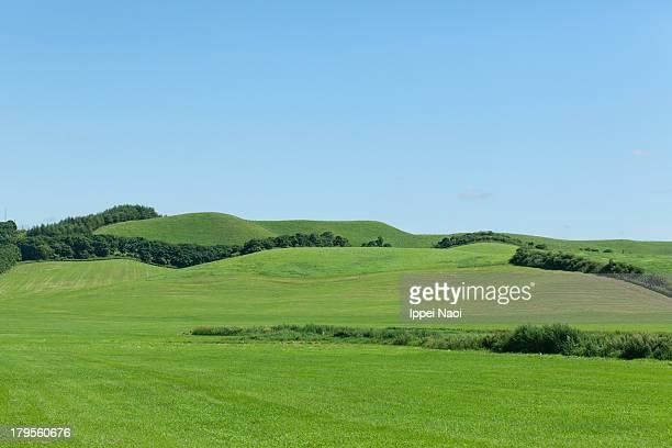 Green pasture land