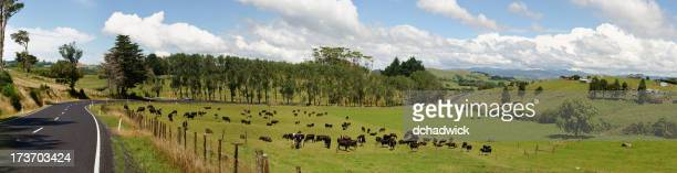 A green pasture on a country road with grazing cows