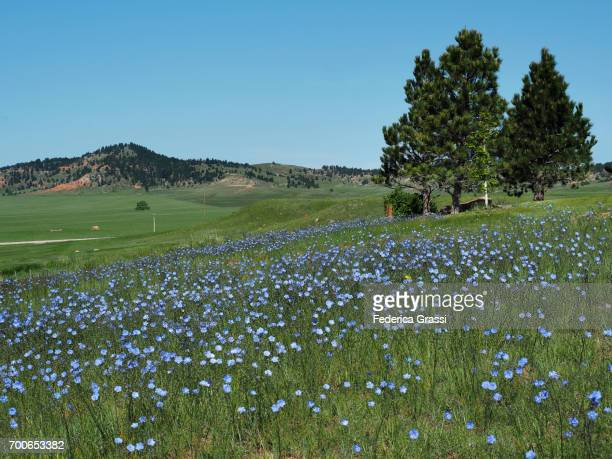 Green Pastures and Wild Flowers of South Dakota