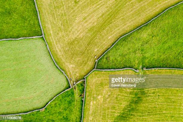 green pastures - cultivated land stock pictures, royalty-free photos & images