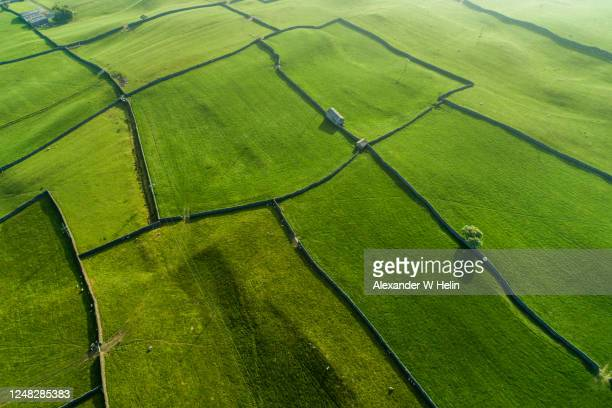 green pastures - farm stock pictures, royalty-free photos & images