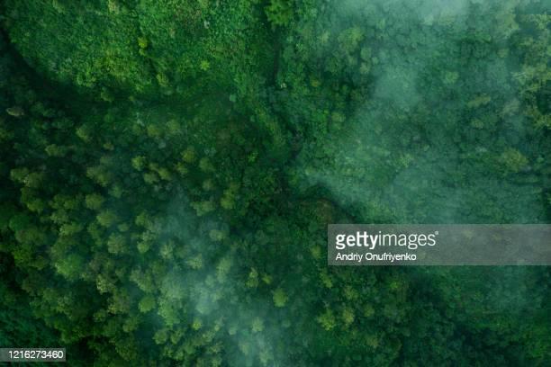 green pattern - vue aérienne photos et images de collection