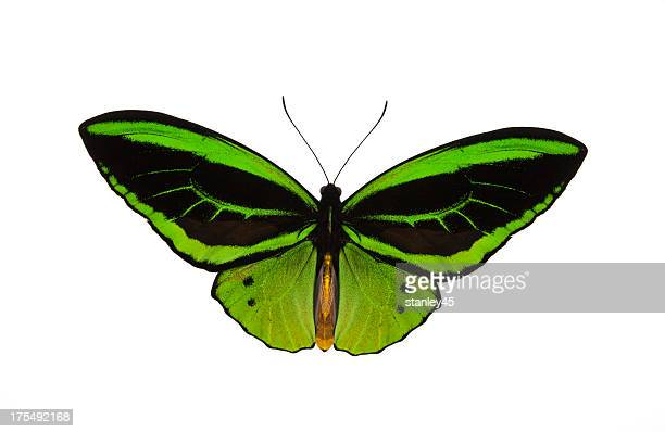 Green patterned butterfly against a white backdrop