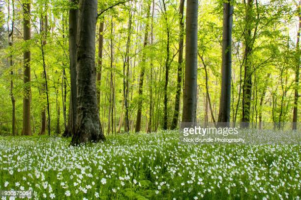 green peace - tree trunk stock pictures, royalty-free photos & images