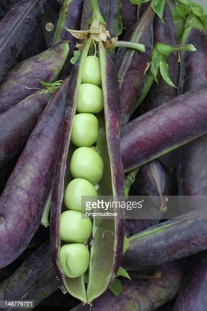 green peas in a purple pod