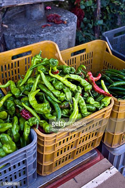 Green peppers in a plastic tray, greengrocery in Calabria, South of Italy, Italy, Europe