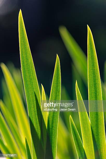 green. - s0ulsurfing stockfoto's en -beelden