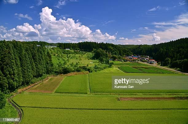 green - 東北地方 ストックフォトと画像