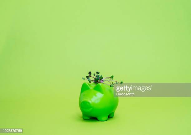 green piggybank with green seedling. - guido mieth stock pictures, royalty-free photos & images