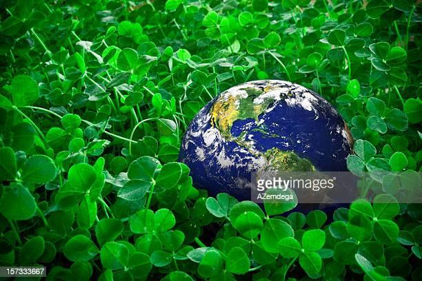 verde planet - clover foto e immagini stock
