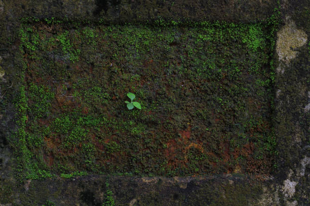 Green plant growing on damp rock, Kerala, India