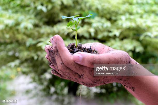 Green plant in hand and green nature background , Ecology concept .