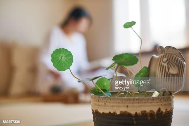green plant in the tea ceremony room - 和室 ストックフォトと画像