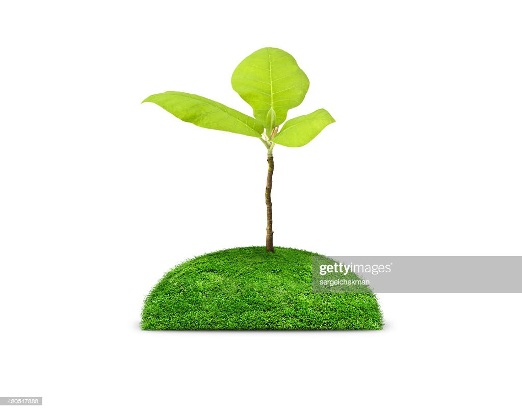 Green plant isolated on white : Stock Photo