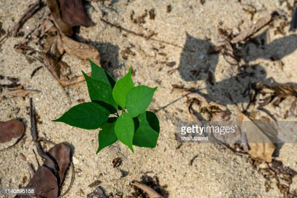 green plant over river sand at national park of kuala tahan, malaysia - shaifulzamri stock pictures, royalty-free photos & images