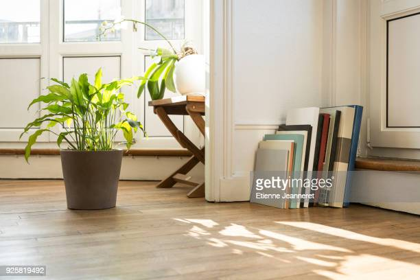 green plants and art books on parquet floor, nancy, france - wooden floor stock pictures, royalty-free photos & images