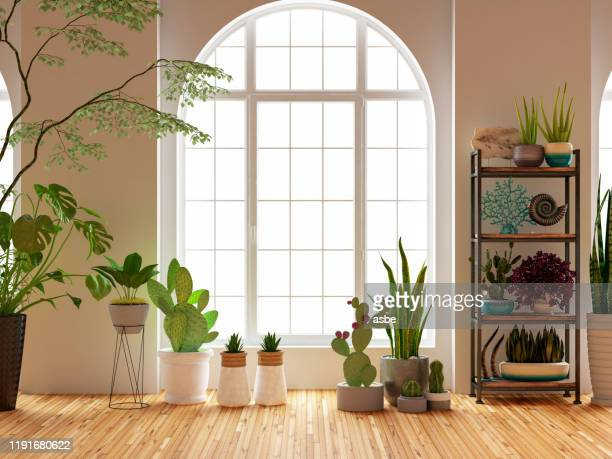 green plants and flowers with window - houseplant stock pictures, royalty-free photos & images