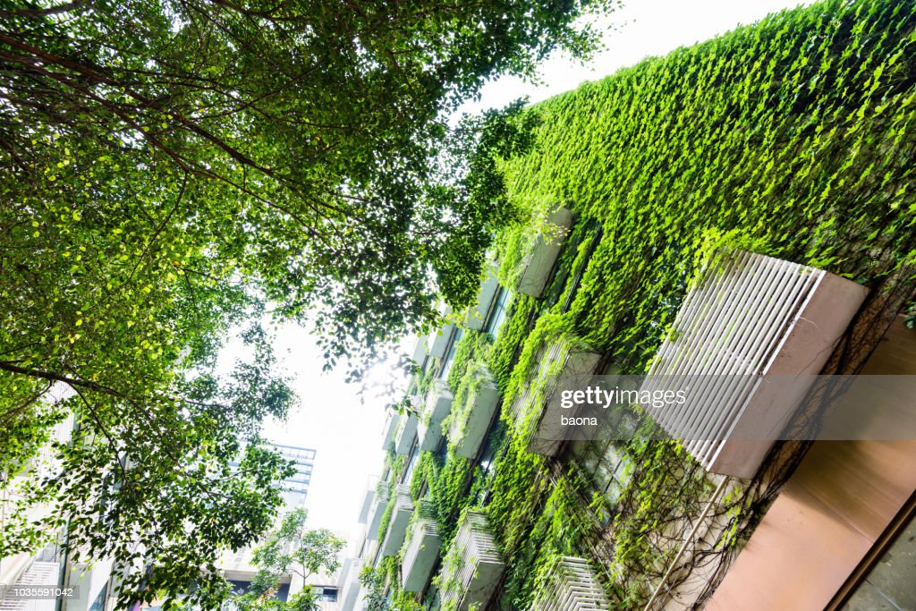 Green plants are growing on building walls : Stock Photo