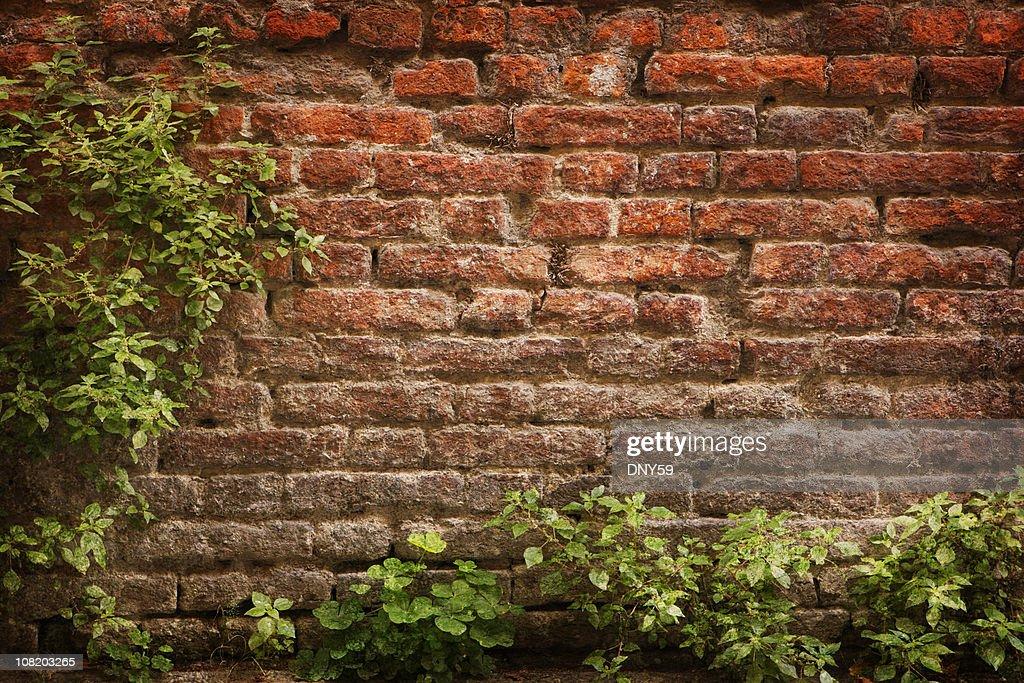 Green Plants Framing Old Brick Wall : Stock Photo