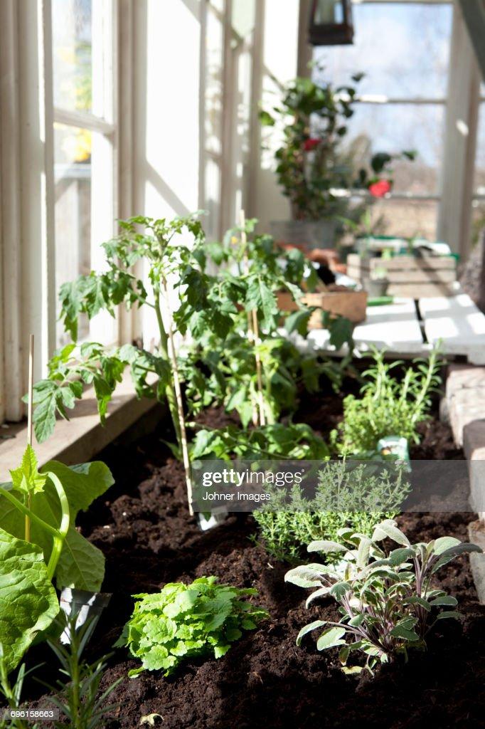 Green plants growing by window : Stock-Foto