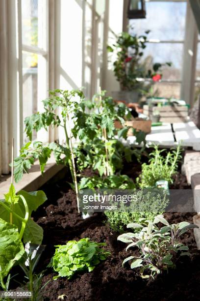 green plants growing by window - vertikal stock-fotos und bilder