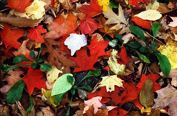 UNS: From The Archives - The Signs Of Autumn