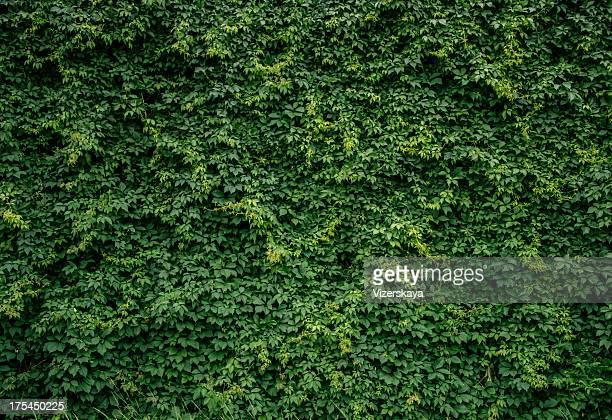 Plantas verdes pared
