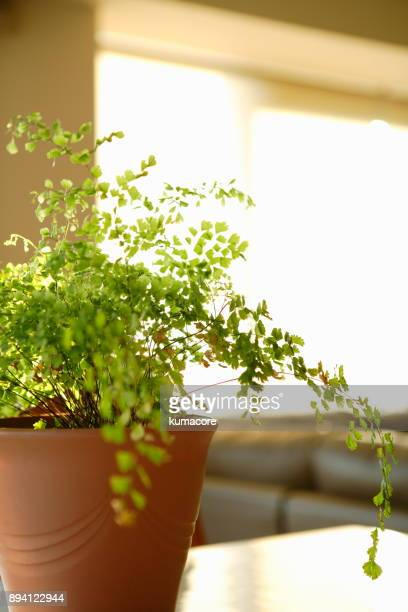 Green potted plants in the room