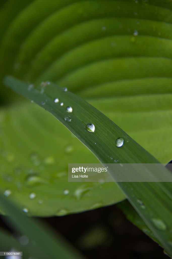 Green Raindrops : Stock Photo