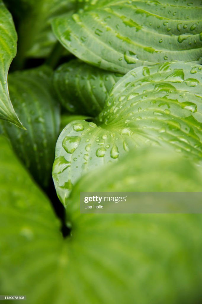 Green Raindrops : Foto de stock