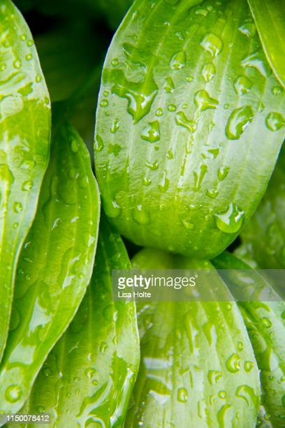 Green Raindrops