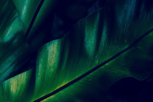 Green rainforest fern dew closeup 452678795