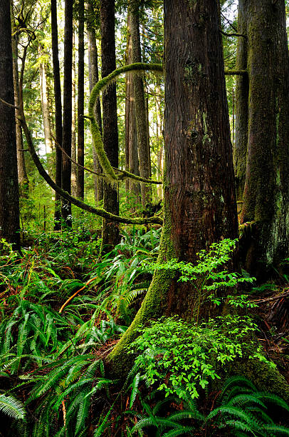 Green Rainforest With Curved Branches And Fern In Vancouver Island Wall Art