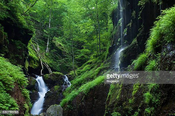 green ravine - isogawyi stock pictures, royalty-free photos & images