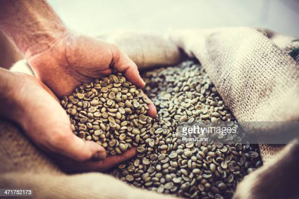 Green Raw Coffee Bean Crop